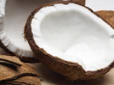Voortbestaan van de kokosnoot bedreigd