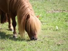 Straf voor insmeren ponyvagina met glijmiddel en masturberen in wei