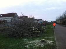 Bomen ziek, kaalslag in Cuijkse wijk Heeswijkse Kampen