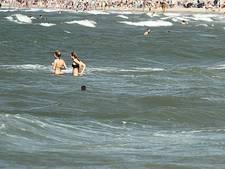 Zwemmen met zeehond kan gewoon in Hoek van Holland