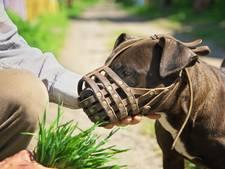 Politiek wil regels aanscherpen voor agressieve honden