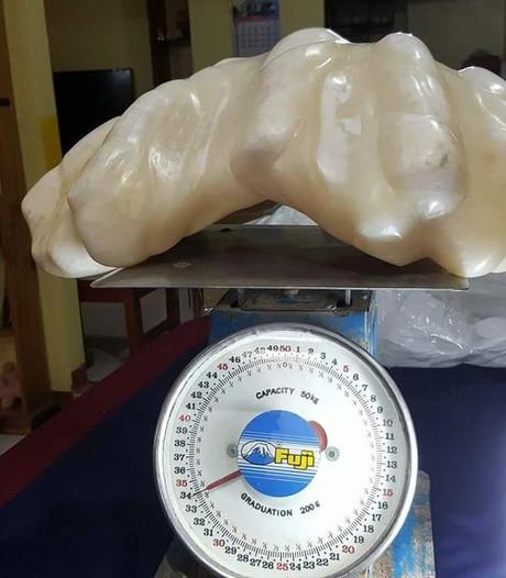 Grootste parel ter wereld lag 10 jaar onder bed Filipijnse visser
