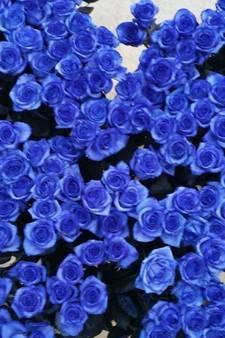 Blauwe rozen voor treurende agenten