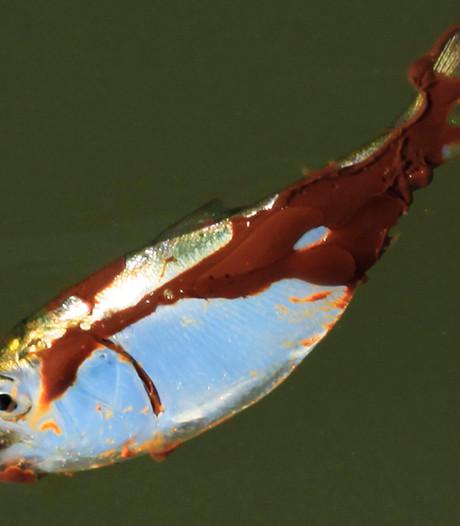 Tonnen ruwe olie in Rode Zee door lek in pijpleiding