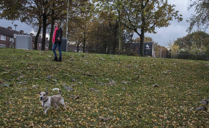 Het veldje waar de honden straks kunnen rennen en hun behoefte doen.