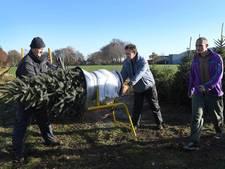 Kerstbomen te koop, nog voor sinterklaas weer naar Spanje is