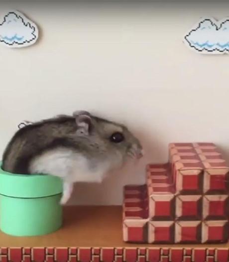 Hamsterversie gemaakt van spelletje Super Mario Bros