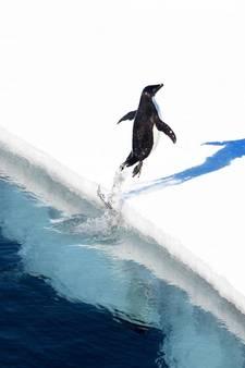 Het grootste beschermde zeepark ter wereld