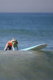 Dappere viervoeters surfen voor het goede doel