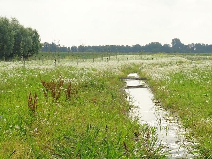 Belangstellenden kunnen 30 juli een kijkje komen nemen bij Voedselbos De Parkse Gaard .