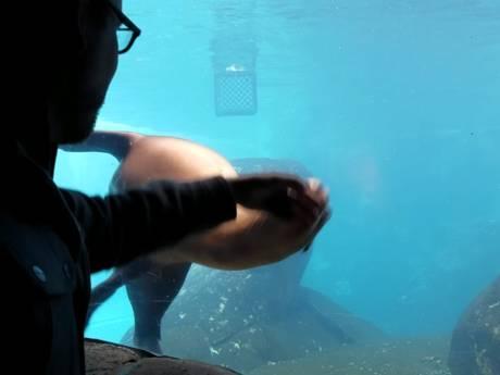 Video van de dag: Zeeleeuw speelt met bezoeker