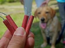 Dierenliefhebbers blijven ondanks vuurwerkverbod op hun hoede: 'Het kattenluik gaat gewoon dicht'