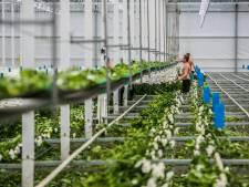 'Minder arbeidskrachten uit Oostblok bereid om in Nederland te werken'