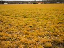 Olst-Wijhe verbiedt giftig glyfosaat op eigen weilanden, 'Gif is per definitie niet goed'