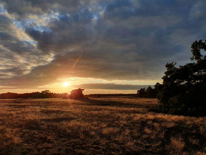 Chantal van Regteren maakte deze foto in Nationaal park de Hoge Veluwe (bij Otterlo).