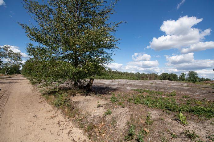 Het nieuwe IJstijdenpad moet wandelaars in de toekomst nog beter informeren over het ontstaan van de Sallandse Heuvelrug.