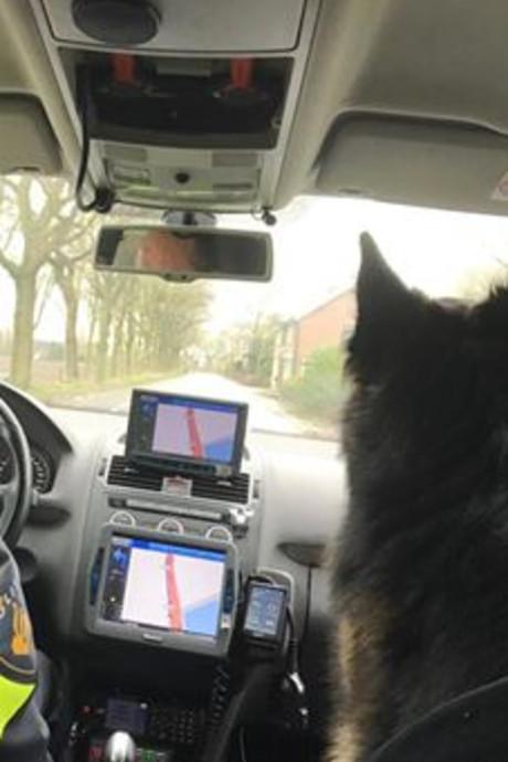 Weggelopen hond geniet van ritje in politieauto: viervoeter gevonden langs A16