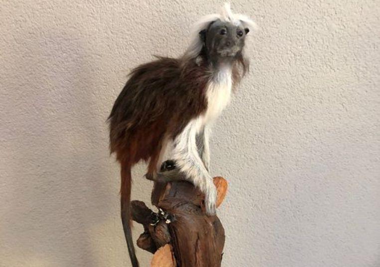 Een pinché-aapje, te koop aangeboden via veilingsite Catawiki. Beeld Catawiki
