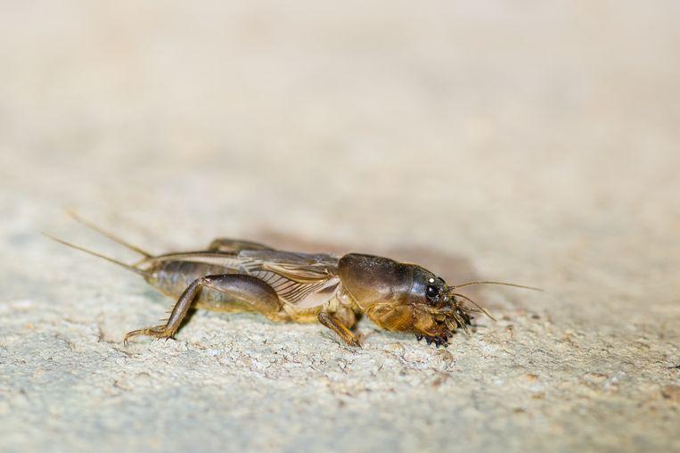 Een voorbeeld van een illegaal gevangen insect