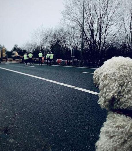 Hond kijkt toe nadat hij met baasje ongeluk had op A50