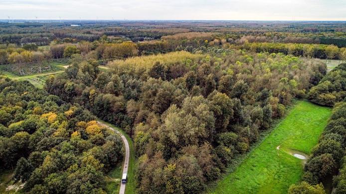 Luchtfoto van het bos waar  het lichaam van Anne Faber is gevonden.
