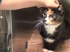 Dierenarts over de kattenziekte: 'Ziekte kan dodelijk zijn'