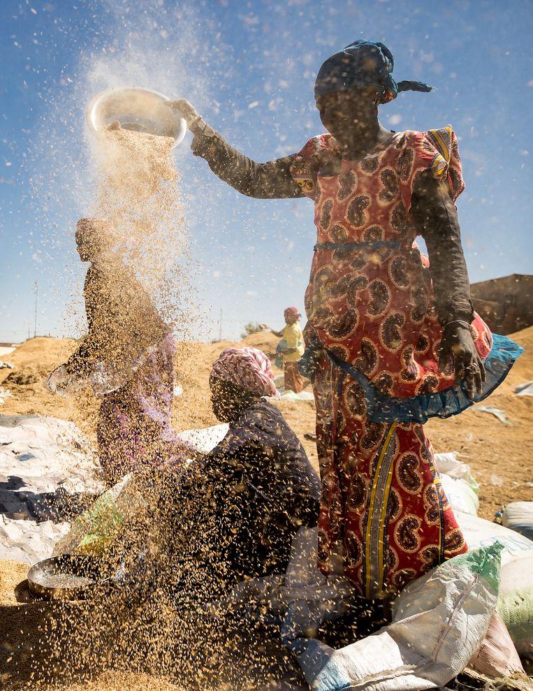 Vrouwen houden hun zeven hoog in de wind om de rijst te drogen en sorteren. Beeld Sven Torfinn
