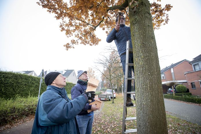 De wijkraad Hassinkbrink neemt zelf preventieve maatregelen tegen de eikenprocessierups. Han van Hagen, Henry Siemerink en Johan Put hangen nestkastjes op.