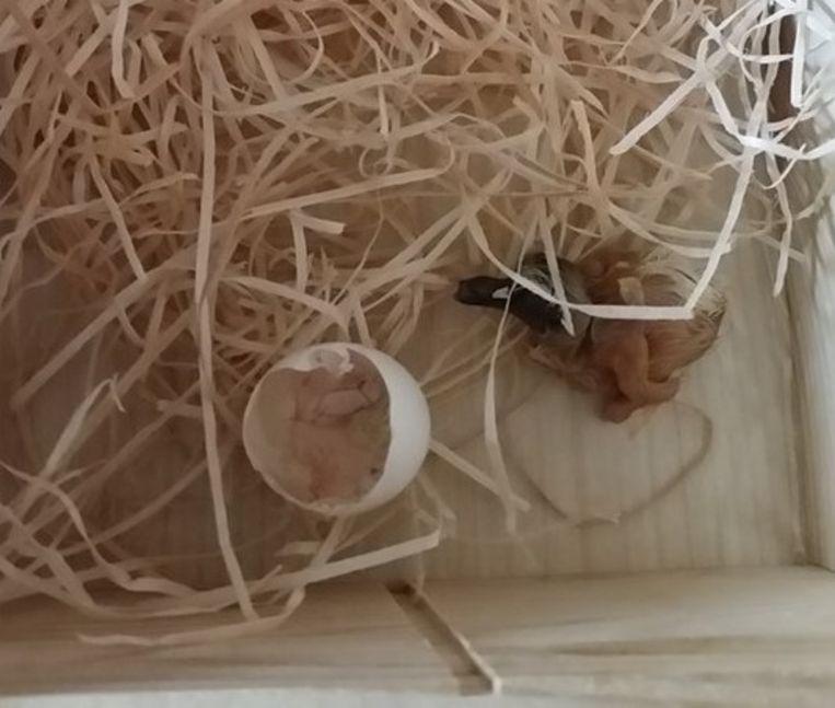 Een vogeltje bleek nog in het gevonden ei te zitten.