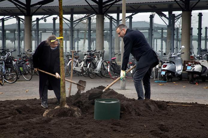 Wethouder Erik de Vries en Jet Meijer planten een boom aan de Broederwal in Helmond.