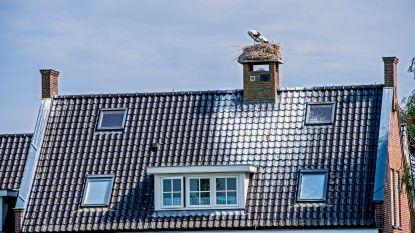 Ooievaars dwarsbomen verkoop villa van 1,2 miljoen euro met hun uitwerpselen