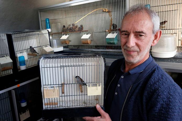 Bram van Eersel heeft zo'n tweehonderd vogels, de grootste prijswinnaar is deze Ceresamadine.