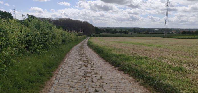 Het glooiende fietslandschap van Borgloon.