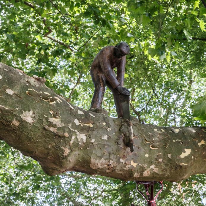 Het Zagertje, nog comfortabel en hard aan het werk op zijn tak in Leidsebosje. De boom heeft zijn zaagje op een zeker moment ingekapseld.