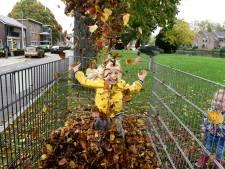 Herfst bijeen in een korf