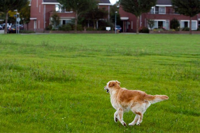 Lang niet overal mogen honden loslopen.