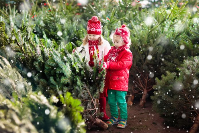 Kinderen kiezen een kerstboom uit