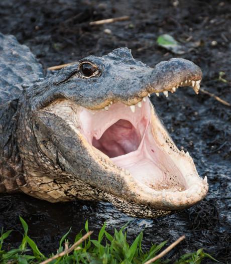 """La police avertit du danger des """"meth-gators"""" et se fait charrier"""
