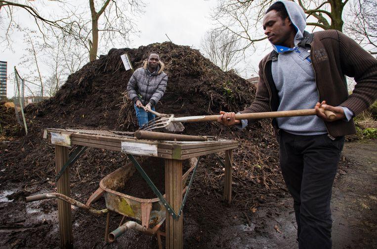 Vluchtelingen doen vrijwilligerswerk in een tuinenpark in Utrecht. Beeld ANP