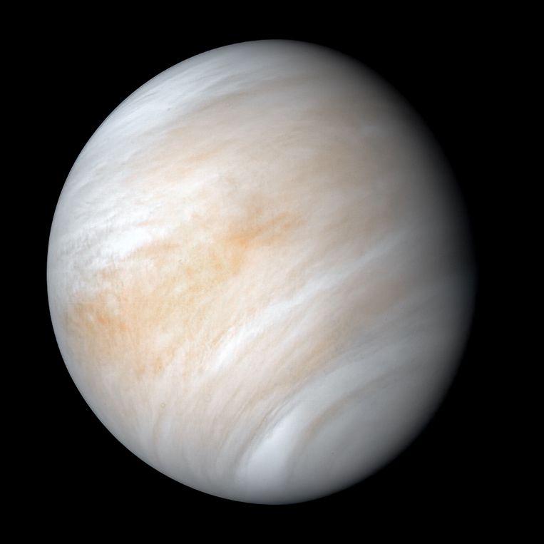 In de bovenste laag van de atomosfeer van onze buurplaneet Venus schuilt mogelijk leven. Beeld NASA/JPL-Caltech