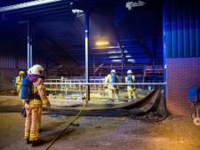 Boer Alfred verliest vier kalfjes bij stalbrand 't Harde: 'Dit gaat je niet in de koude kleren zitten'