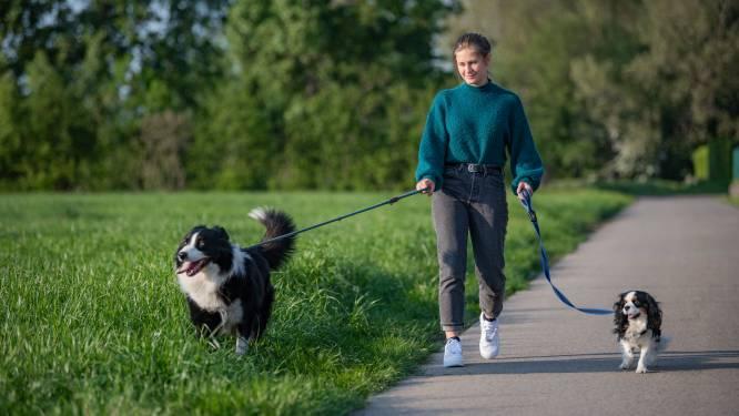 Opnieuw loopt hond vergiftiging op in natuurgebied Vlassenbroek