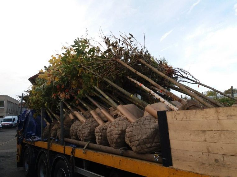 De nieuwe bomen werden onlangs bij de gemeentediensten geleverd.