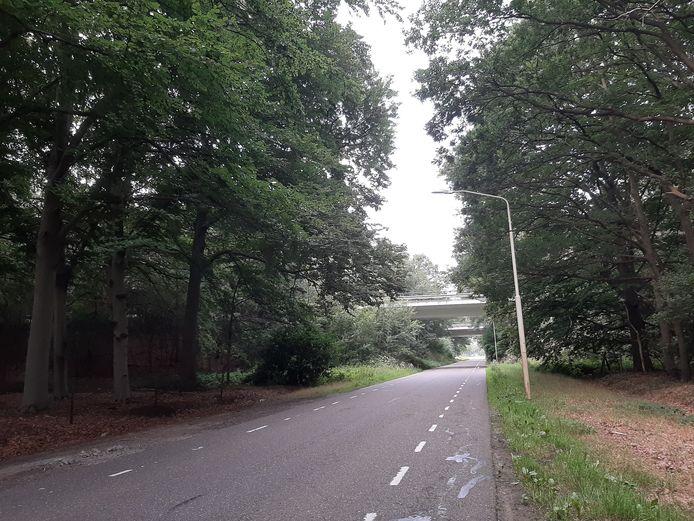 Ter hoogte van de twee viaducten onder de N267 door zal het fietspad van de Tuinbouwweg noodgedwongen vlak langs de rijweg komen te liggen. Er is domweg te weinig ruimte bij de viaducten op de achtergrond, en de gemeente wil de beuken links ook graag behouden.