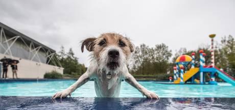 Hondenweer in zwembad Rheden