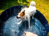 Vitens: stop met zwembaden vullen en tuinen sproeien