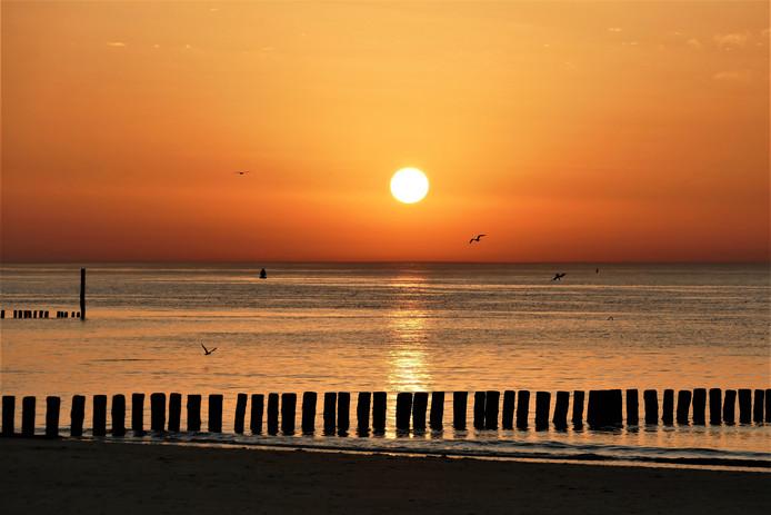 De rust heeft zich over dit strand in Zeeuws-Vlaanderen gekeerd, maar de meeuwen zijn nog druk bezig.