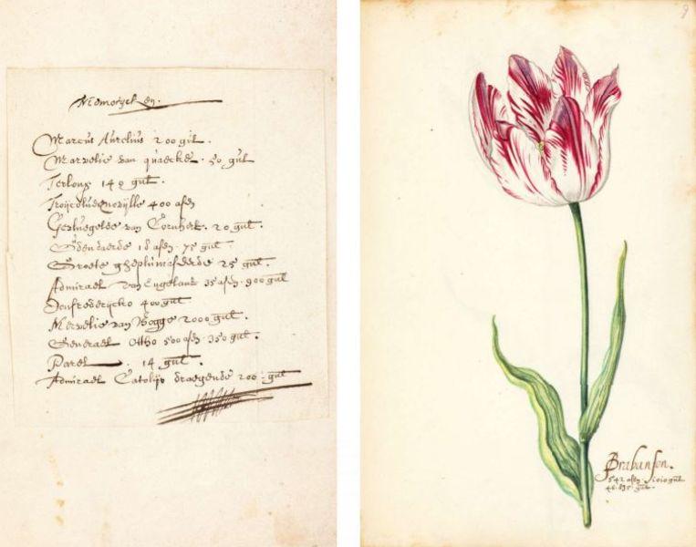 Pagina's uit het 'tulpboek' van Nicolaes Tulp.