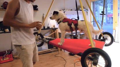 Johannes wil zijn hond laten vliegen en heeft daar een documentaire over gemaakt