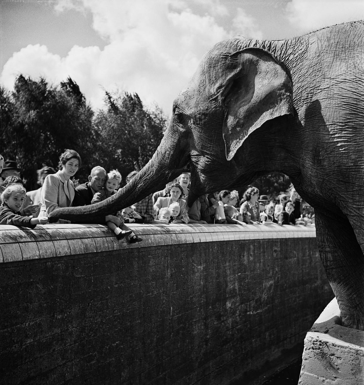 Diergaarde Blijdorp, 1952-1953. Beeld Steef Zoetmulder/Nederlands Fotomuseum
